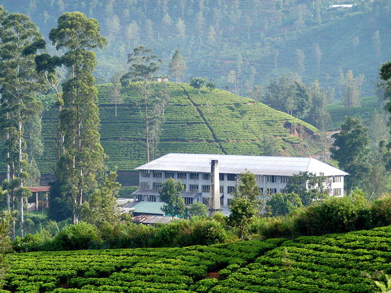 Magical Isle Holidays Destinations Nuwara Eliya