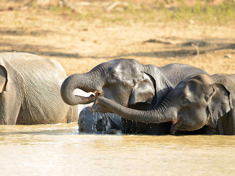 Safaris In Sri Lanka by Magical Isle Holidays