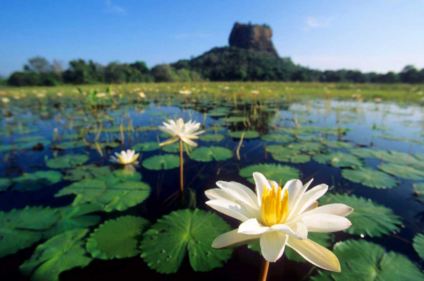 Classic Sri Lanka Tour, Magical Isle Holidays, Sri Lanka